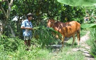 Gương nông dân vượt khó thoát nghèo