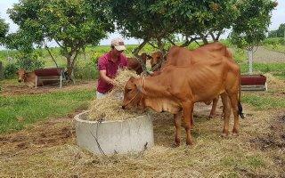 Bài cuối:  Cần đầu tư phát triển chăn nuôi bền vững