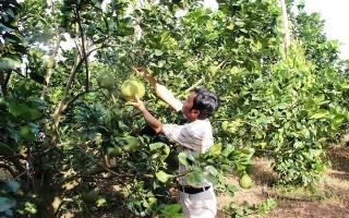 Nhiều mô hình sản xuất nông nghiệp công nghệ cao gắn với nơi tiêu thụ sản phẩm