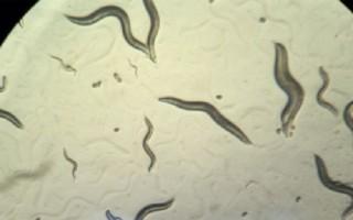 Năm loại vi khuẩn kháng kháng sinh đáng sợ trong nửa thập kỷ