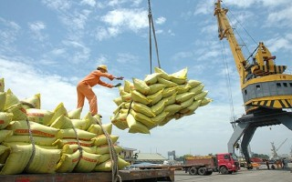 Tháng 10 'cởi trói' xuất khẩu gạo: Đón đầu cơ hội