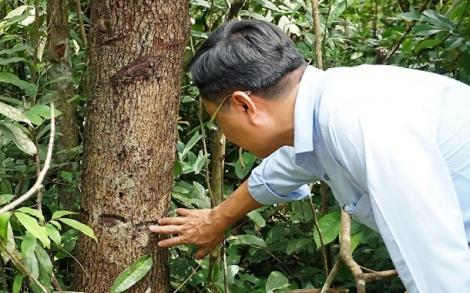 Muôn kiểu phá rừng