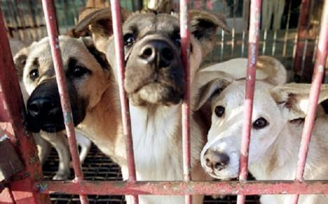 Ngành công nghiệp thịt chó Hàn Quốc lao đao trước sự tẩy chay của giới trẻ