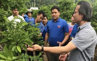 Tạo điều kiện để thanh niên tiếp cận mô hình nông nghiệp ứng dụng công nghệ cao