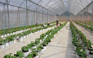 Phát triển nông nghiệp ứng dụng công nghệ cao và xây dựng thương hiệu nông sản