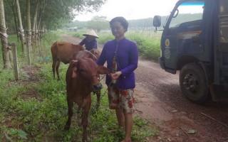 Tặng bò cho hộ nghèo, cận nghèo xã Phước Vinh