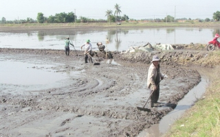 Mực nước lụt xuống nhanh, nông dân tranh thủ sạ lúa sớm