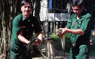 Hiệu quả từ Tổ hợp tác nuôi cá lồng bè