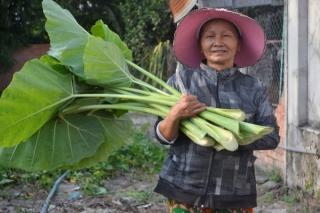 Vườn rau sạch vì nữ sinh nghèo
