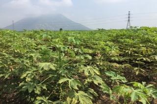 Quy định mức hỗ trợ thiệt hại do thiên tai, dịch bệnh trong lĩnh vực nông nghiệp