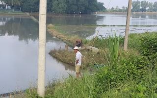 Sau bão, hàng trăm hecta lúa mới gieo ở Châu Thành, Bến Cầu ngập trong nước