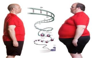 Phát hiện một loại gene giúp bạn 'ăn mãi không béo'