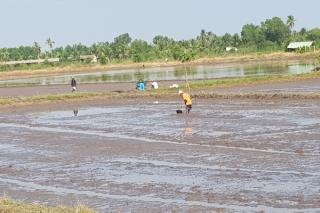 Nhiều nơi thiếu điện sản xuất nông nghiệp