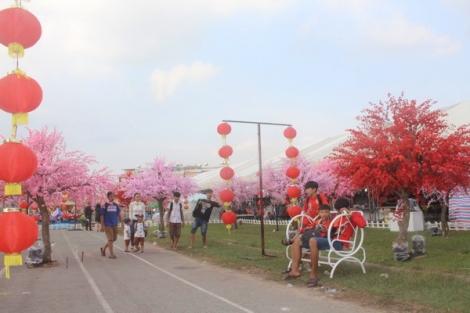 Thích thú với vườn hoa anh đào tại lễ hội bánh tráng phơi sương Trảng Bàng