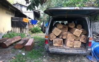Phát hiện hai vụ vận chuyển gỗ quý