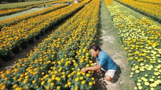 Đa dạng chủng loại hoa phục vụ Tết