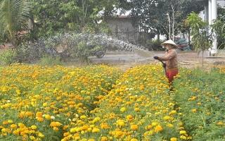 Làng hoa vạn thọ ấp Hiệp Trường
