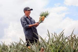 Nông nghiệp công nghệ cao trên đà phát triển