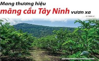 Mang thương hiệu mãng cầu Tây Ninh vươn xa