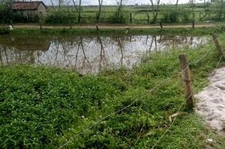 Châu Thành: Hai trường hợp tử vong do điện giật