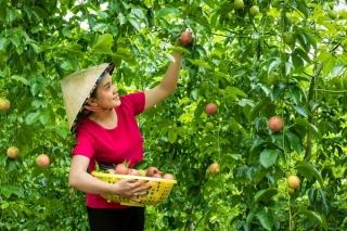 Phải làm cho người dân thấy lợi ích của việc sản xuất nông sản sạch