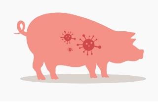 Dịch tả lợn châu Phi lây lan từ các nước đến Việt Nam