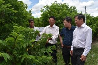 Từng bước nâng cao chuỗi giá trị nông sản
