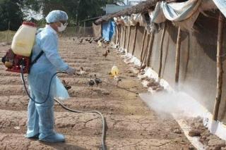 Chủng virus cúm gia cầm mới xuất hiện sát nách Việt Nam