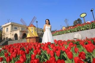Vòng quanh thế giới ngắm những vườn tulip vạn người mê