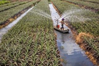 Đẩy mạnh việc huy động nguồn vốn phát triển nông nghiệp