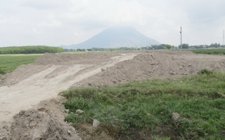 Đô thị phát triển, nhu cầu chuyển đổi đất lúa gia tăng
