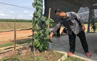 Châu Thành: Cần cảnh giác với nạn trộm cây cảnh