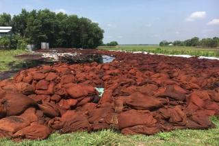 Công ty chế biến vỏ lụa hạt điều gây ô nhiễm môi trường
