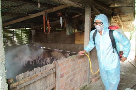 Khẩn cấp thực hiện các giải pháp phòng chống bệnh dịch tả lợn Châu Phi