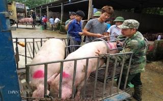 Giá heo hơi 2/6: Sợ dịch, nhiều người bán chạy lợn, giá gảm mạnh