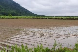 Vì sao nhiều nông dân vẫn chưa nhận được tiền hỗ trợ thiệt hại do cơn bão số 9 gây ra ?