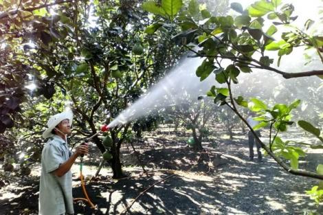 Nỗ lực phát triển nông nghiệp công nghệ cao