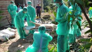 Thêm 2 hộ chăn nuôi có heo chết nghi nhiễm dịch