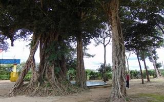 Long Giang- miền cổ tích Bến Cầu