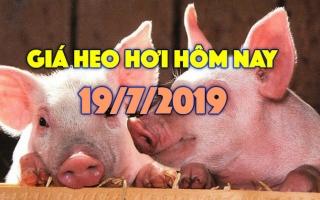 Giá heo hơi hôm nay 19/7: Giá heo miền Nam biến động trái chiều, Đồng Nai bất ngờ tăng