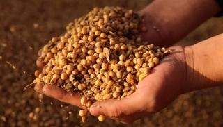 Trung Quốc tuyên bố ngừng mua nông sản Mỹ