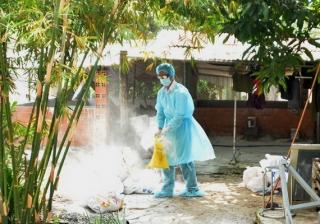 TP.Tây Ninh: Tiêu huỷ heo nhiễm dịch tả heo châu Phi