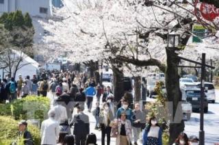 Lượng du khách Việt Nam tới Nhật Bản tăng mạnh trong tháng 7/2019
