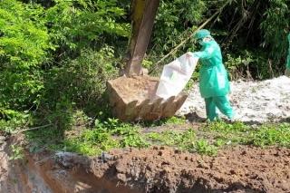 Trên 500 tấn heo phải tiêu hủy vì dịch tả heo châu Phi