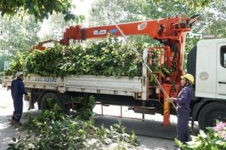 Bảo đảm cây xanh đô thị an toàn trong mùa mưa bão