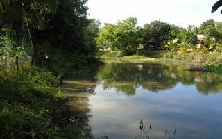Lộc Ninh và Suối Ông Hùng
