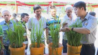 Phòng trừ dịch hại trên cây lúa và rau màu vụ Thu Đông 2019