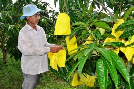 Sản xuất nông nghiệp hữu cơ- hướng đi bền vững cho trái cây Tây Ninh
