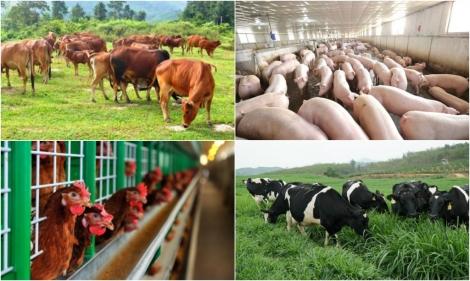 Vi phạm hành chính về chăn nuôi bị phạt đến 200 triệu đồng