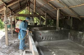 Châu Thành: Trên 7.000 con heo bị nhiễm bệnh dịch tả heo Châu Phi
